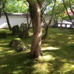 京都観光と大阪・千里川の土手
